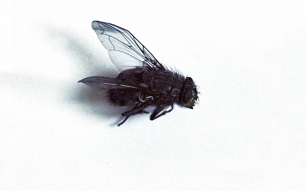 """© Petra Egg, """"Fliege"""", zu einen Zitat aus dem Buch ÚLTIMO ROUND von Julio Cortázar"""
